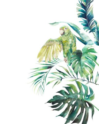 Plakát Watercolor green parrot frame. Hand drawn greeting card design with exotic leaves and branches isolated on white background. Palm tree, banana leaves, mostera plants