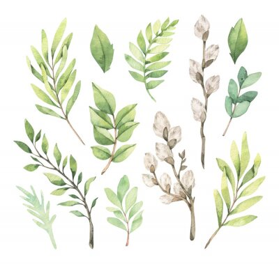 Plakát Watercolor illustrations with eucalyptus, green leaves and willow. Easter brunches. Spring greenery design elements. Perfect for cards, invitations, banners, posters.