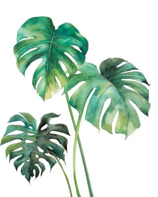 Plakát Watercolor tropical leaves poster. Hand painted exotic green branches isolated on white background. Summer plants illustration