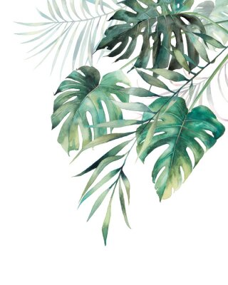 Plakát Watercolor tropical leaves poster. Hand painted exotic monstera and palm green branches composition on white background. Summer plants illustration