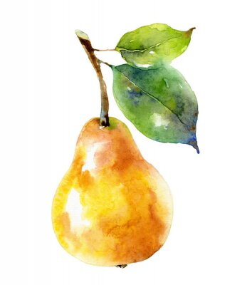 Plakát Watercolor yellow pear isolated on white background