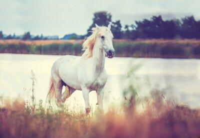 Plakát white horse is running on the lake shore