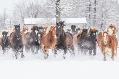 Plakát 冬 の 馬