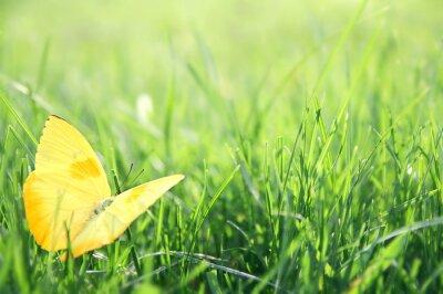 Plakát Yellow Butterfly v zelené trávě pozadí