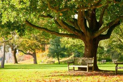 Plakát Zahrady v Kew Park