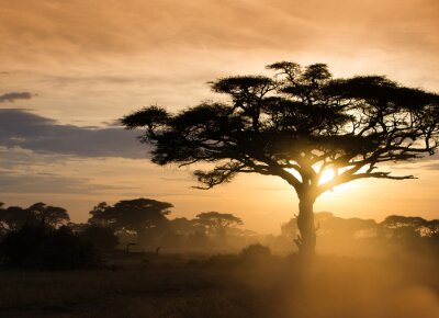 Plakát Západ slunce na africké savany