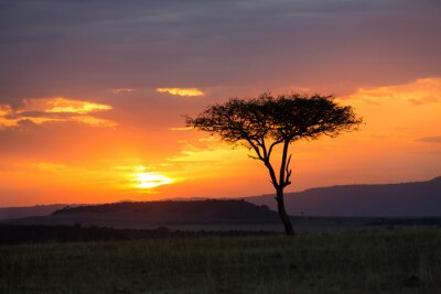 Plakát Západ slunce v národním parku Serengeti, Tanzánie, Afrika