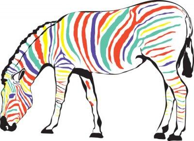 Plakát Zebra Kolorowa