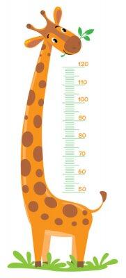 Plakát Žirafa metr zeď