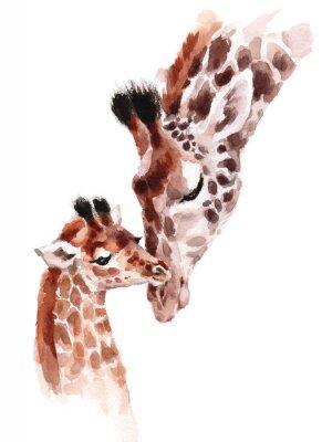 Plakát Žirafy matka a dítě akvarel ručně malované ilustrace divokých zvířat izolovaných na bílém pozadí