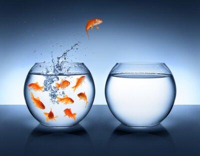 Plakát zlatá rybka na lyžích - zlepšení a kariéra koncepce