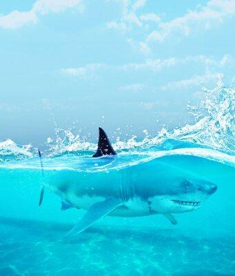 Plakát Žralok pod vodou, 3d ilustrace